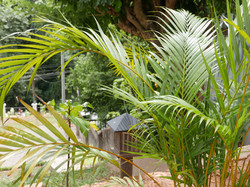 Villa Nilmalee gardens