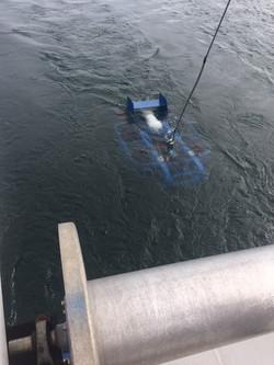 Bellamare stingray sled water.JPG