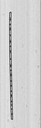 Phyto 13.08mm