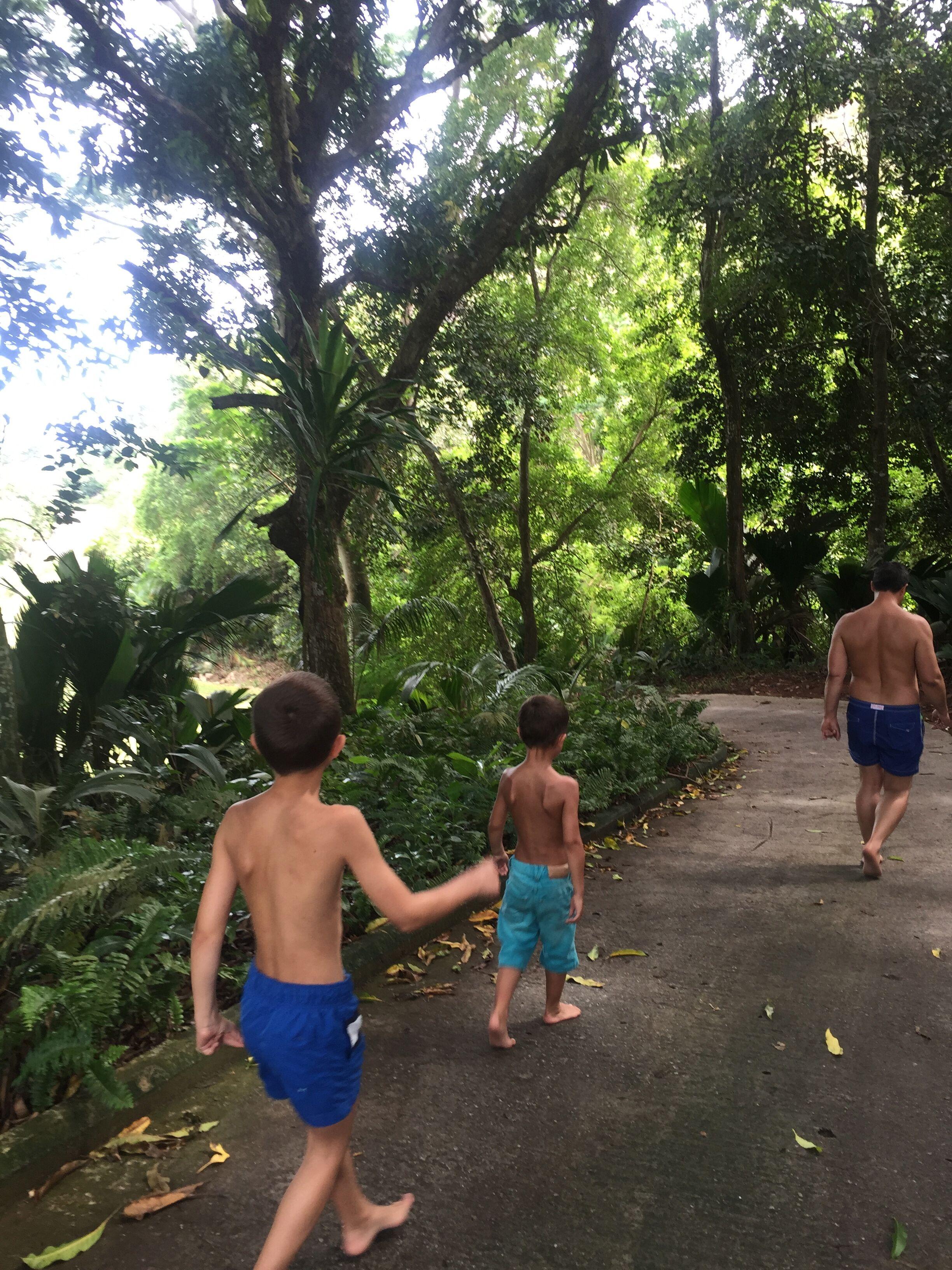 Wege durch tropische Natur