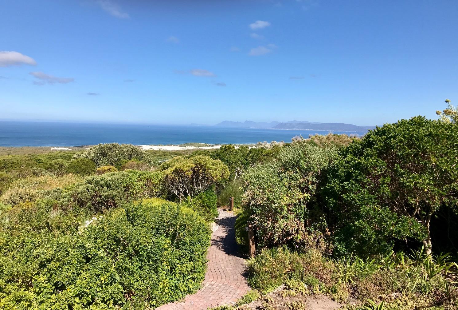 Fynboos Vegetation
