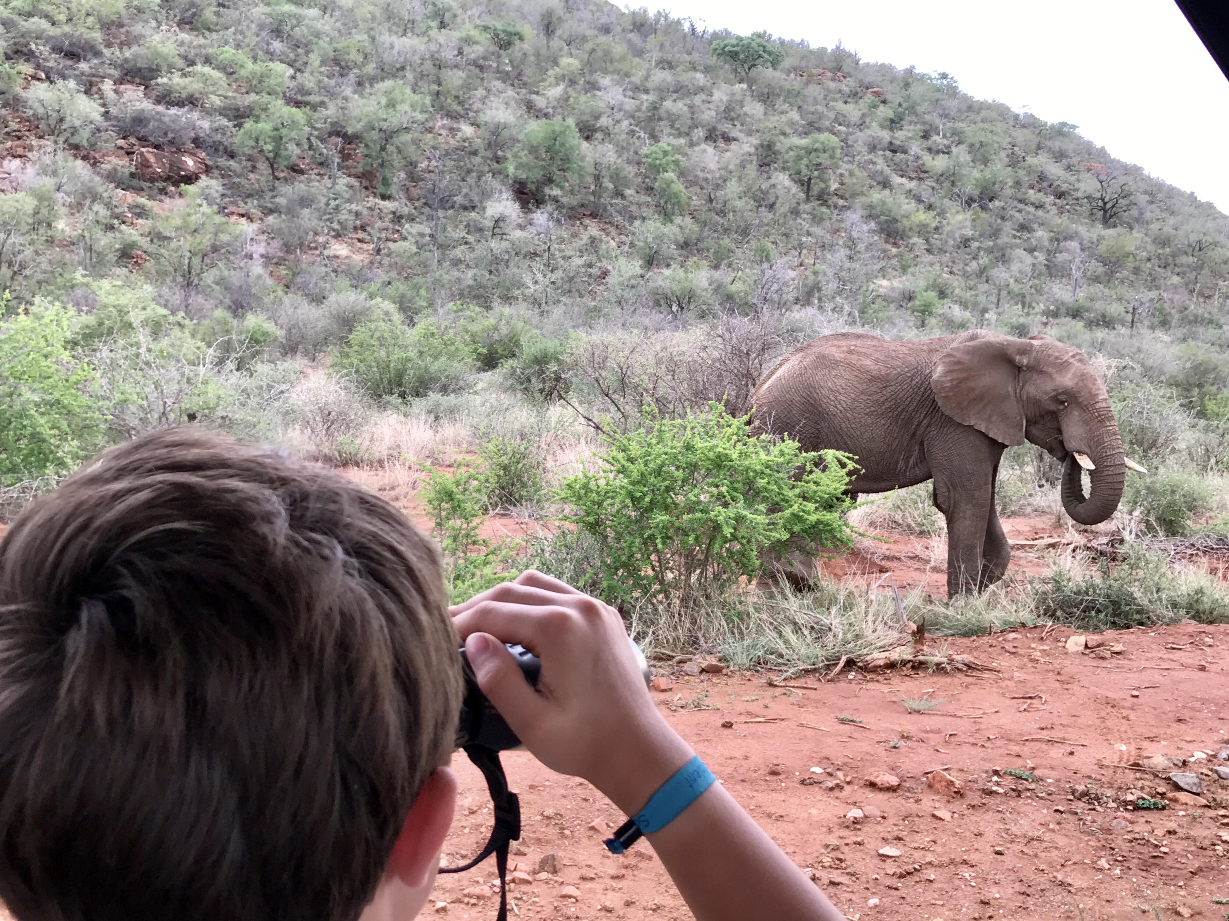 Elefanten-Beobachtung