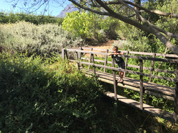 Brücke in den Gärten