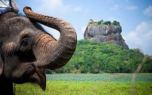 Elephant in Sigiriya lion rock fortress,