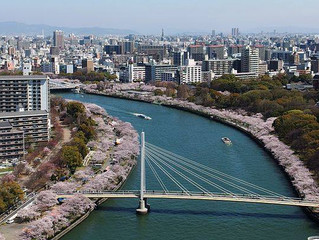 Cherry trees of the Japan mint