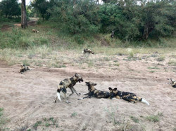 Familien Safari - Ulusaba