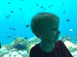 Unterwasser-Restaurant