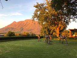 Delaire Graff Estate- Südafrika