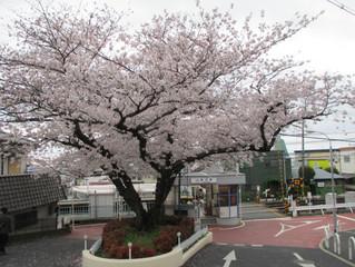 東大阪市私房賞櫻景點&生駒山上遊園地一日遊