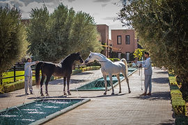 Selman_Horses_4.jpg