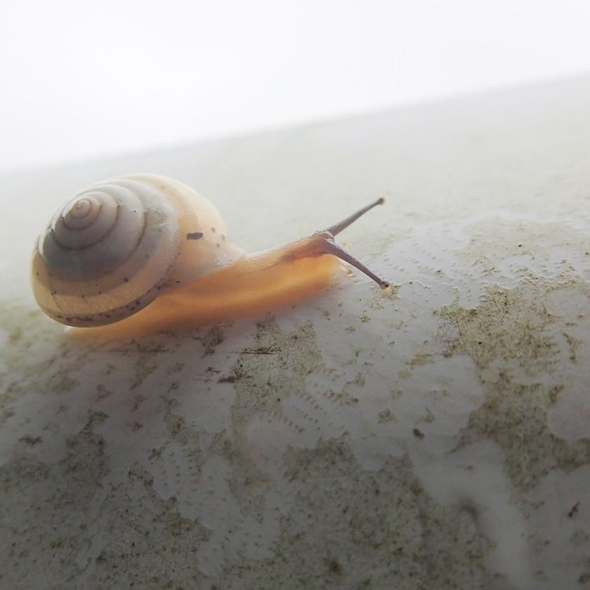 海の貝 川の貝 陸の貝 さがしてみつけてくらべてみよう@産の森学舎夏休みWS