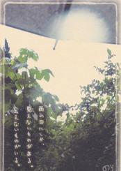 025雨の日の散歩