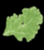 giedriaus augalu pazinimas 4 kas zaliuoj
