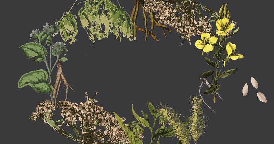 rudeniniai zolinejimai seklos be teksto_Artboard 40 copy 8.jpg