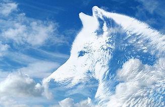 wolf-2559374_640.jpg