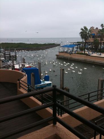 Birds at the Boardwalk