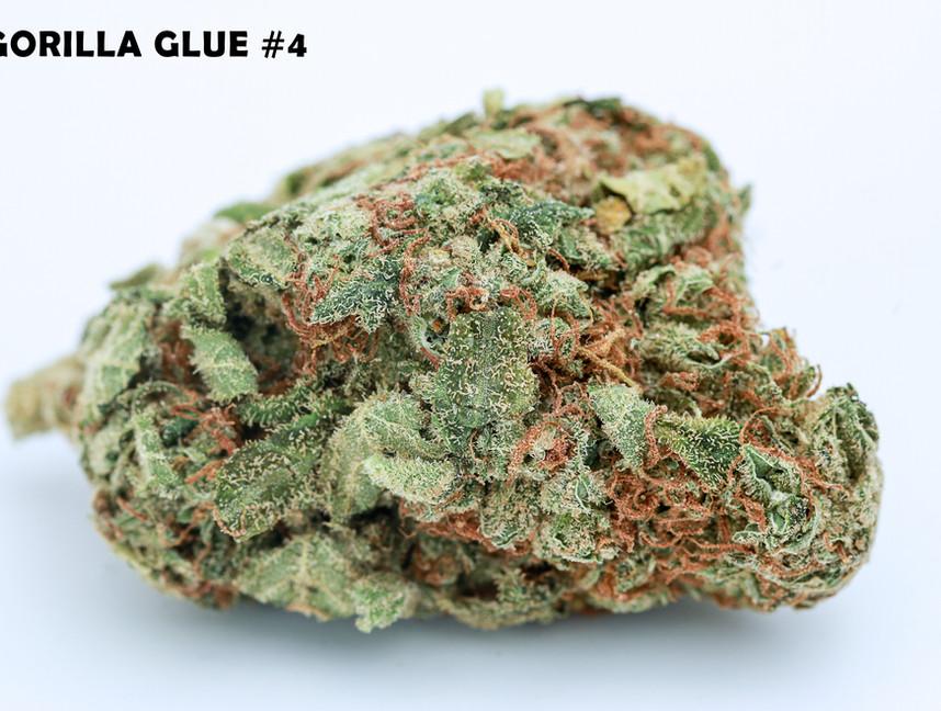Weed Gorilla Glue5.jpg
