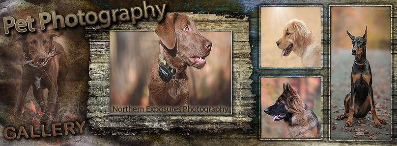 Pet Banner.jpg