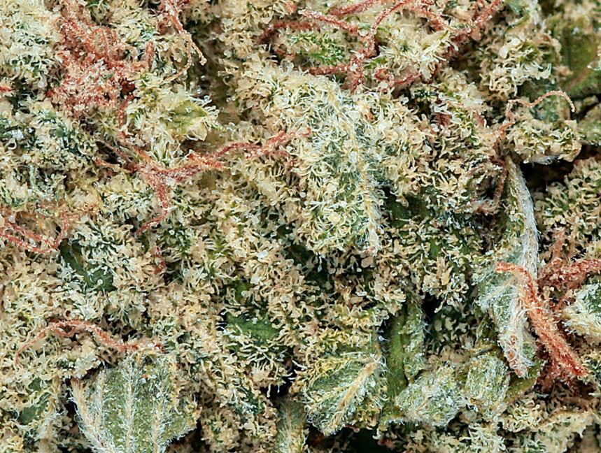 Weed Grapefruit2.jpg