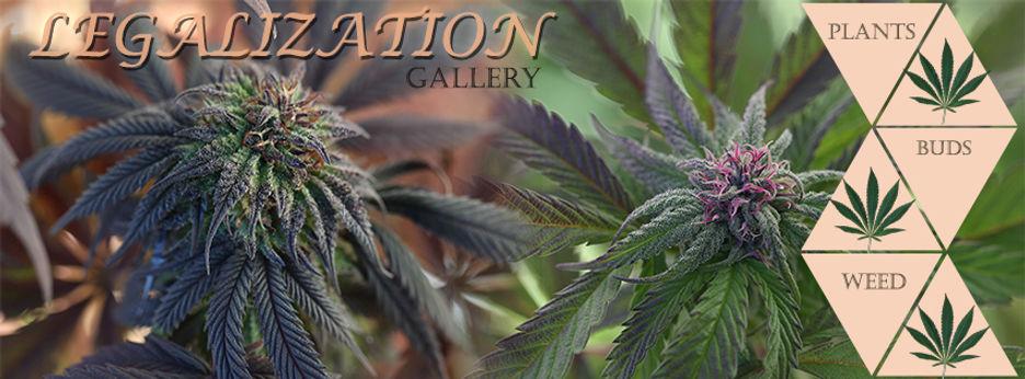 Weed Banner.jpg