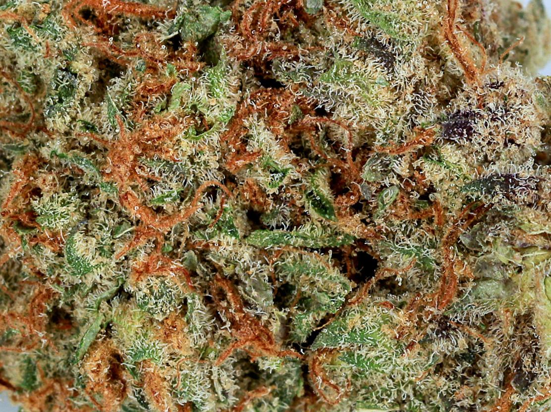 Weed Space Queen2.jpg