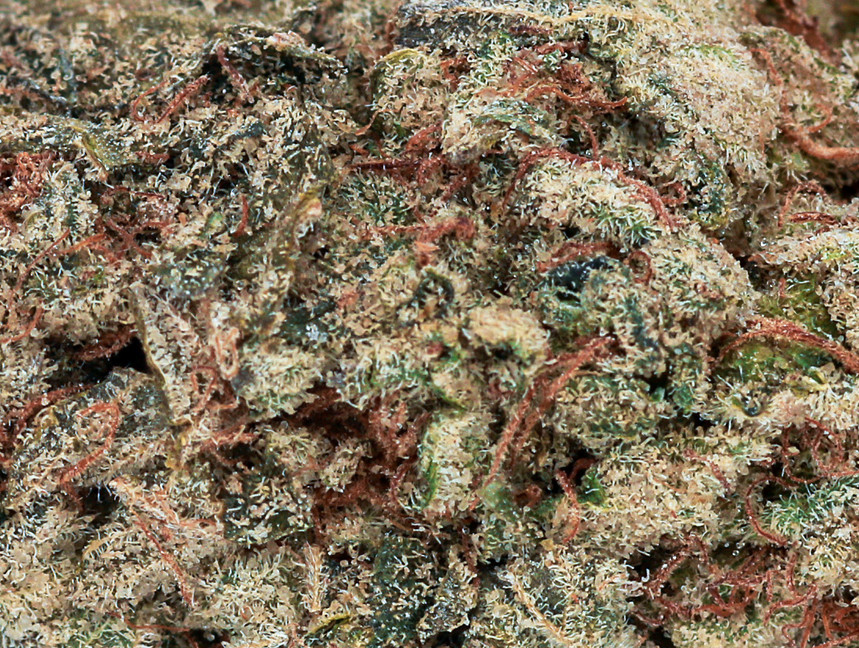 Weed Hindu Kush2.jpg