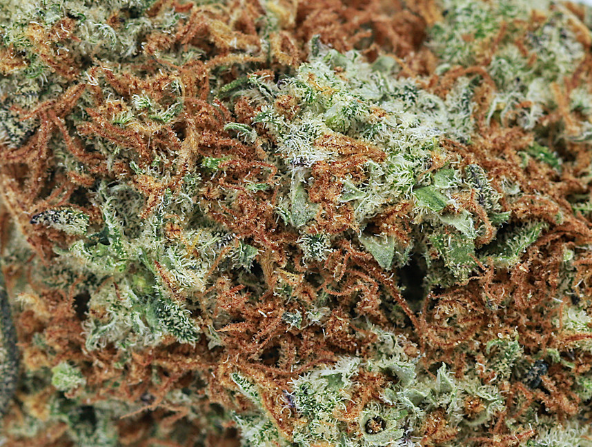 Weed Blackberry OG2.jpg