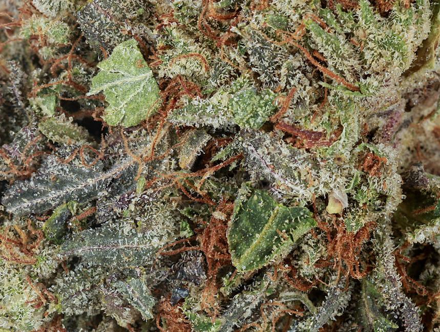 Weed Purple Kush2.jpg