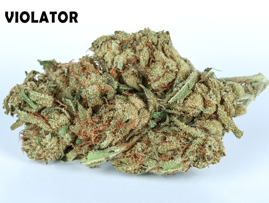 Weed Violator5.jpg