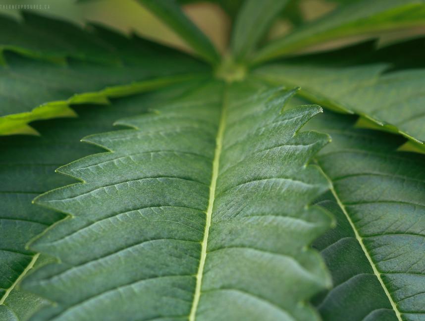 weed1.jpg