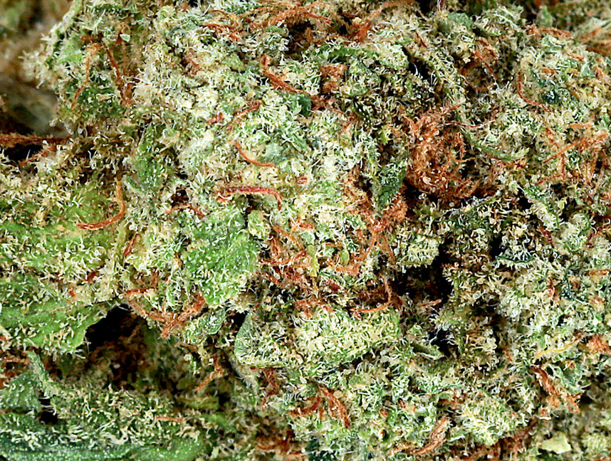 Weed Blue JAck2.jpg