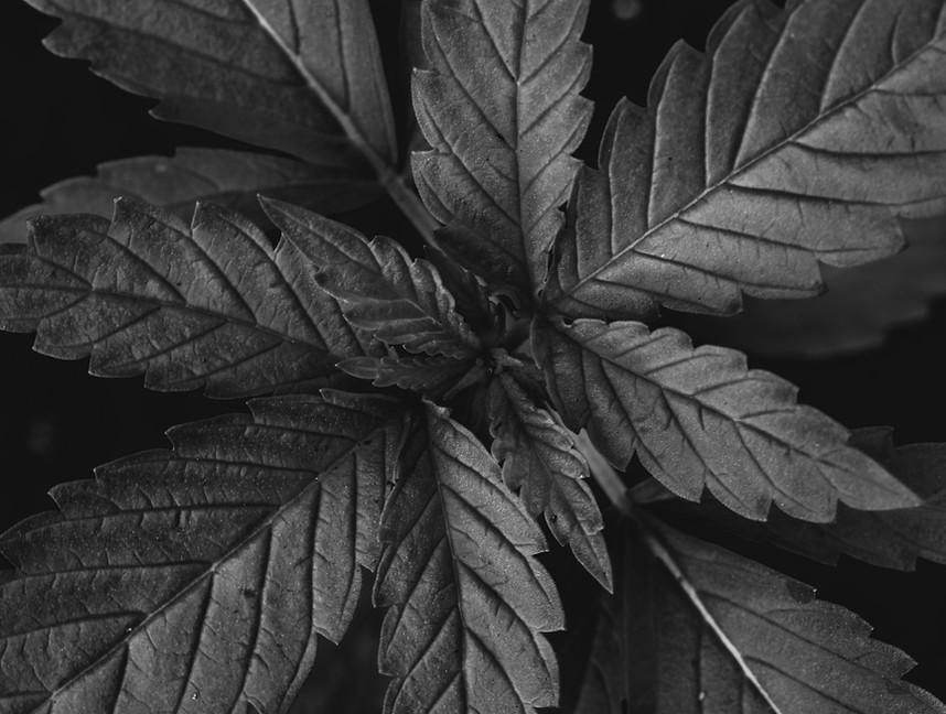 leaf bw.jpg