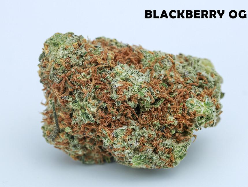 Weed Blackberry OG5.jpg