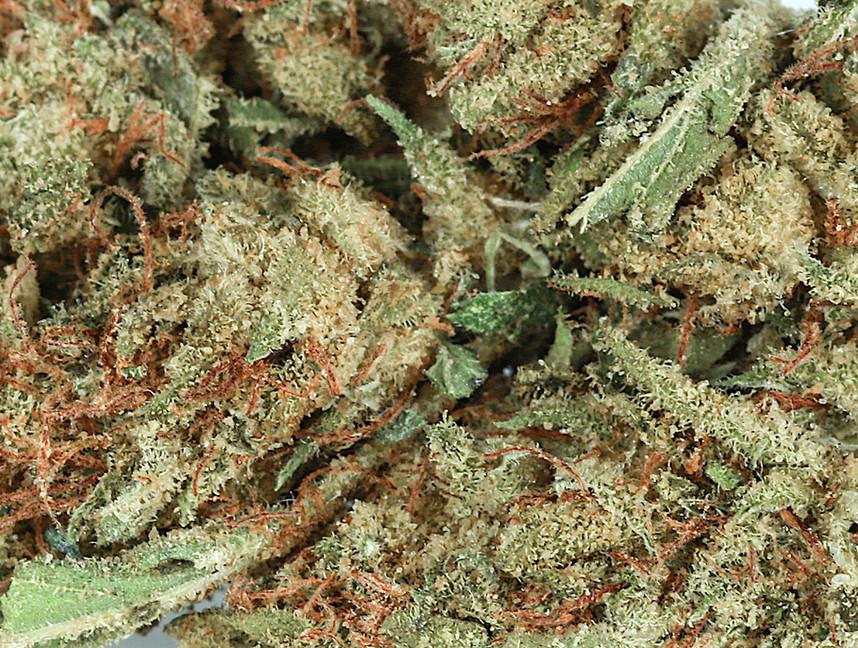 Weed Violator2.jpg