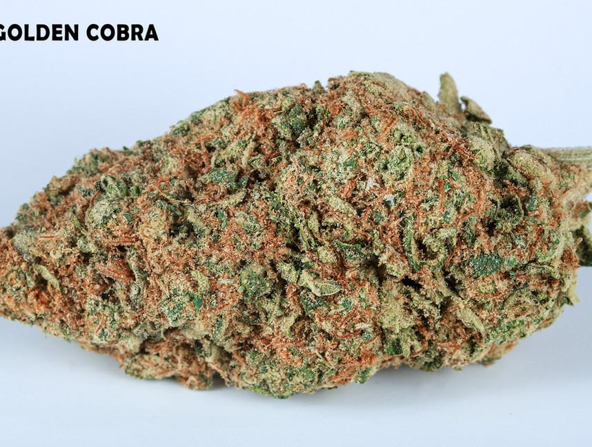 Weed Golden Cobra5.jpg