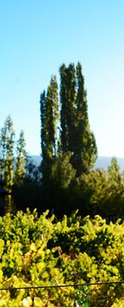 Finca El Bolson Patagonia