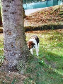 Leckerchenbaum