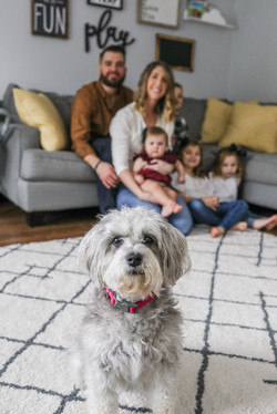family photos play room dog