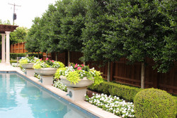 Poolside container plantings