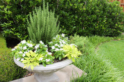 Summer color planting in a container