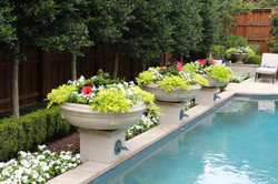Poolside Container Planting