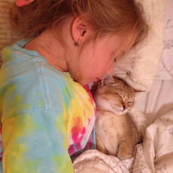 Good night _) #bestcats_oftheworld #bestmeow #ig_catclub #igcutest_animals #ig_animals #britishshort