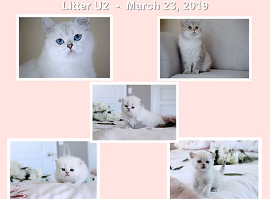 Collage U2.jpg
