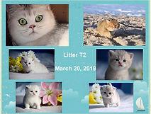 Collage Litter T2.jpg