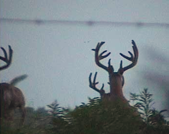 trail cam2_edited