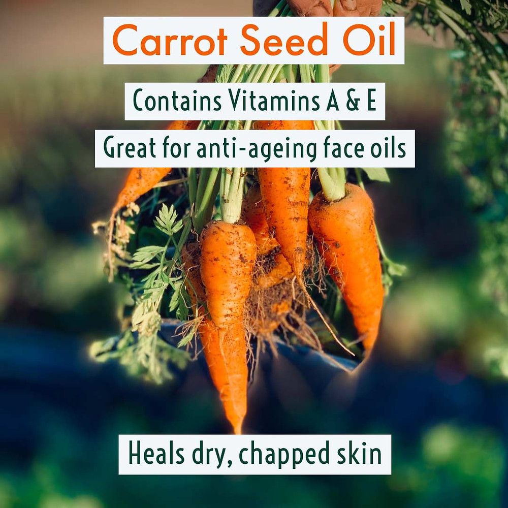 Natural anti-ageing properties in Carrot Seed Oil