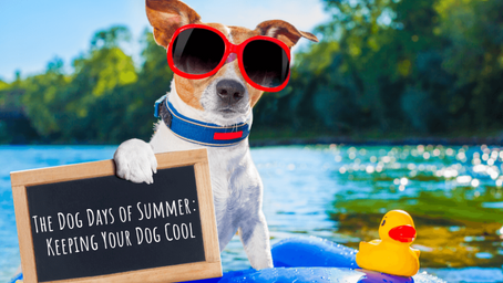 Tips For Keeping Your Dogs Cool During Summer 2021!!