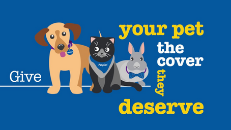 Best Pet Insurance 2020