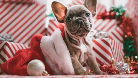Pets as A Christmas Gift??