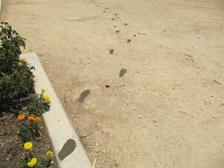 Leaving, soil,Artificial flowers, 2014
